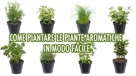 Come piantare le piante aromatiche in modo semplice