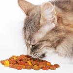 I 20 alimenti da non dare mai ai gatti