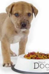 I 13 alimenti da non dare ai cani