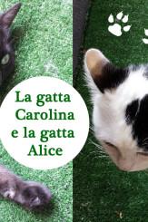 Le nostre gatte meravigliose