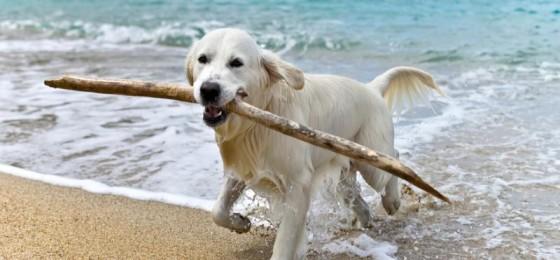 Spiagge per Cani in Italia: dove andare al mare in vacanza