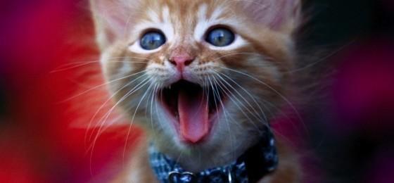 Non mettere mai il sonaglio al gatto: ecco perché