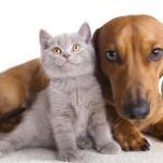 Antipulci per cani e gatti fatto in casa in 1 minuto
